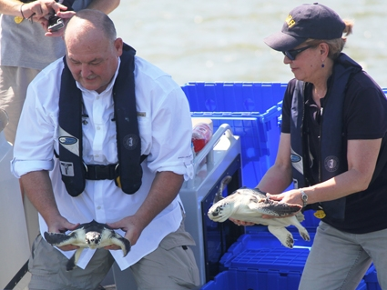 Dr. Lubchenco and ADM Thad Allen, USCG (ret.) release rehabilitated sea turtles off the coast of Cedar Key, Fla.