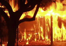 Image of tree and house afire. Click for larger image.