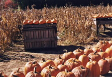 Pumpkins on a crate and on ground. Click for larger image.